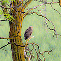 The Owls Overlook by Steve McKinzie