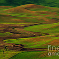 The Palouse by Beve Brown-Clark Photography