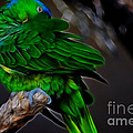 The Parrot Fractal by Donna Greene