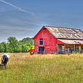 The Pasture by David Troxel