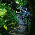 The Path To Iron Creek  by Jeff Swan