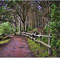 The Path To The Woods by David Theroff