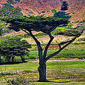 The Peace Tree by David Theroff