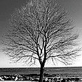 The Perfect Tree by Greg Fortier