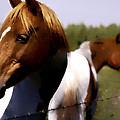 The Prairie Horses by Diane Dugas