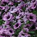 The Purple Sea by Bill Cannon