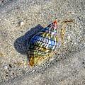The Rainbow Shell by Michael Garyet