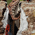 the random Lizard  by Stwayne Keubrick