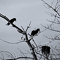 The Raven Tree by Susan Capuano