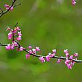 The Rite Of Spring by Fraida Gutovich