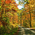 The Road Less Traveled by Steve Harrington