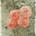 The Rose 2 by Tim Allen