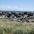 The Rugged Coast by Michael Merry