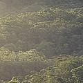 The Schlerophyll Forest Canopy by Jason Edwards