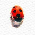 The Shy Ladybug by Steve Taylor