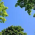 The Sky Through Trees by Don Hammond