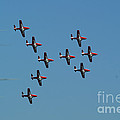 The Snowbirds by Randy Harris