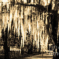 The Spanish Moss by Mike Nellums