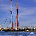The Tall Ship Pacific Grace Based In Victoria Canada by Louise Heusinkveld