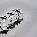 The Three Avocets by Sandra M Barnes