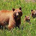 The Three Bears by Bruce J Robinson