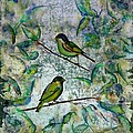 The Time Of Singing Birds by Carolyn Doe