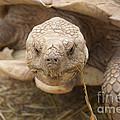 The Tortoise  by J Jaiam
