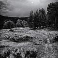 The Trail by David Waldrop