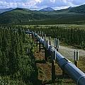 The Trans-alaska Pipeline Runs by Melissa Farlow