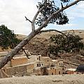 The Tree In Desert by Munir Alawi