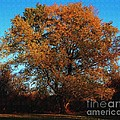 The Tree Of Life by Davandra Cribbie