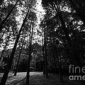 The Trees  by Gary Bridger