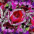 The Tulip by Tim Allen