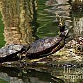 The Turtles by Carolyn Fox