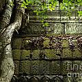 The Wall Ta Prohm 2 by Bob Christopher