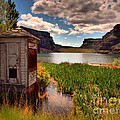 The Water Shed by Tara Turner