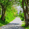 The Way Forward by Diane Macdonald