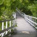 The Whitewater Walk Boardwalk Trail by Darwin Wiggett