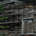 The Window by Ken Frischkorn