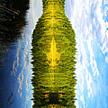 The Wine Bottle by Cary Ligon
