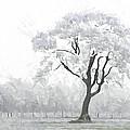 The Winter's Embrace by Steve K