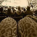 The World Thru Leopard Printed Pants by Kym Backland