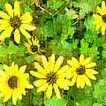 The Yellow Daisies  by Steve Taylor
