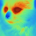 Thermogram Of A Cat by Ted Kinsman