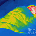 Thermogram Of A Child Sleeping by Ted Kinsman