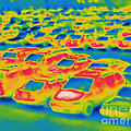 Thermogram Of A Parking Lot by Ted Kinsman