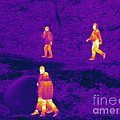 Thermogram Of People Walking by Ted Kinsman