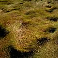 Thick Grasses Blow In The Wind And Form by Todd Gipstein