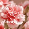 Think Pink by Kim Hojnacki