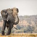 This Is Botswana No.  8 - Feels So Good by Paul W Sharpe Aka Wizard of Wonders